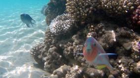 fische-aegypten-rotes-meer-korallenriff